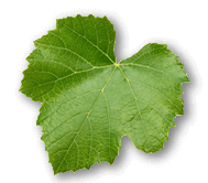 stock-photo-grape-leave-isolated-on-the-white-background-223056730